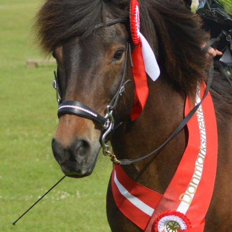 Adam / hest med DM medalje