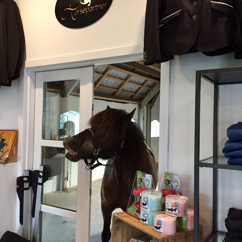 Hest besøger horsepartner